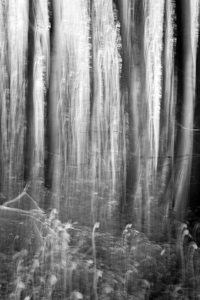 Forest Abstractions 2