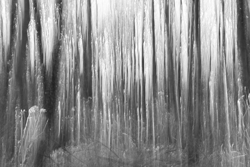 Forest Abstractions 3