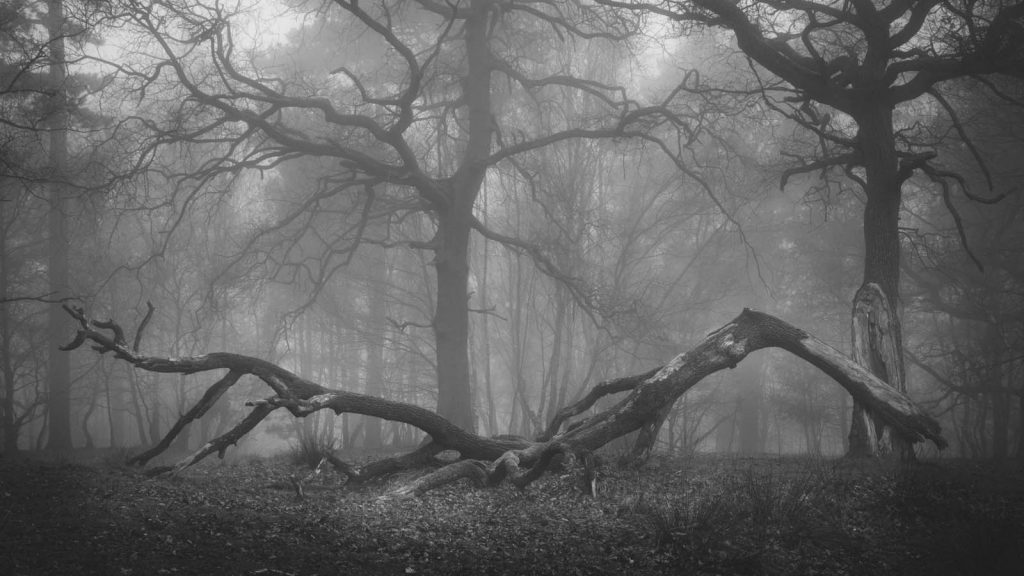March - Sherwood Forest
