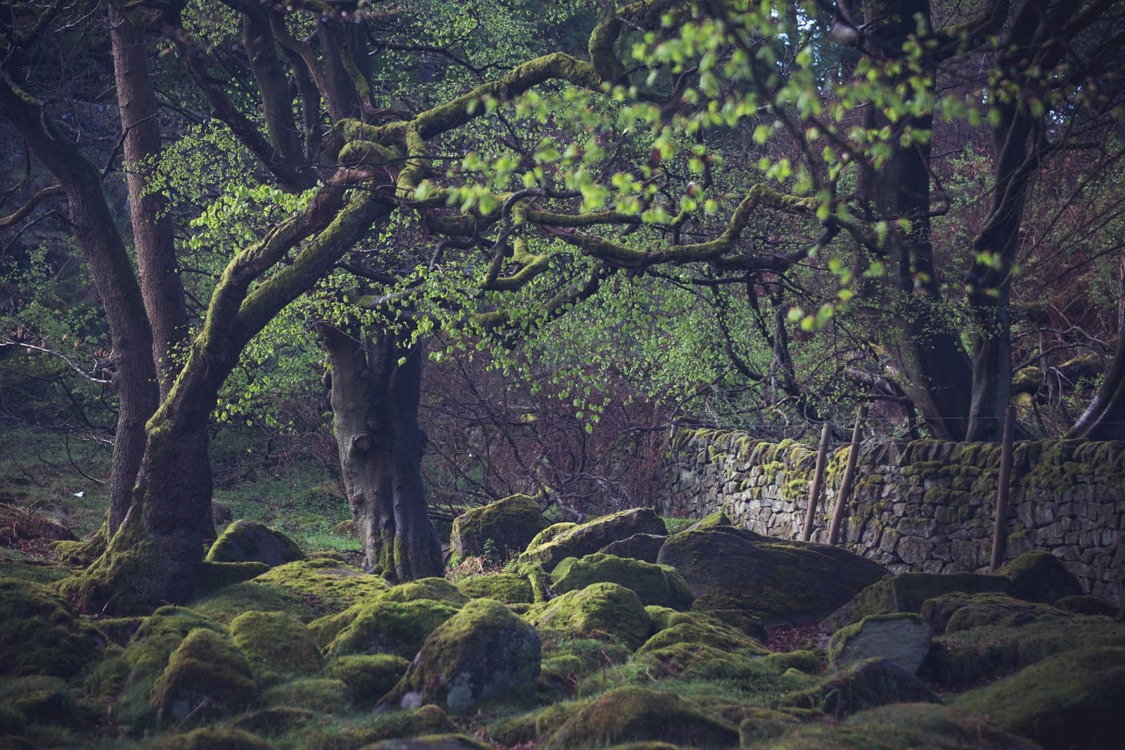 May - Padley Gorge