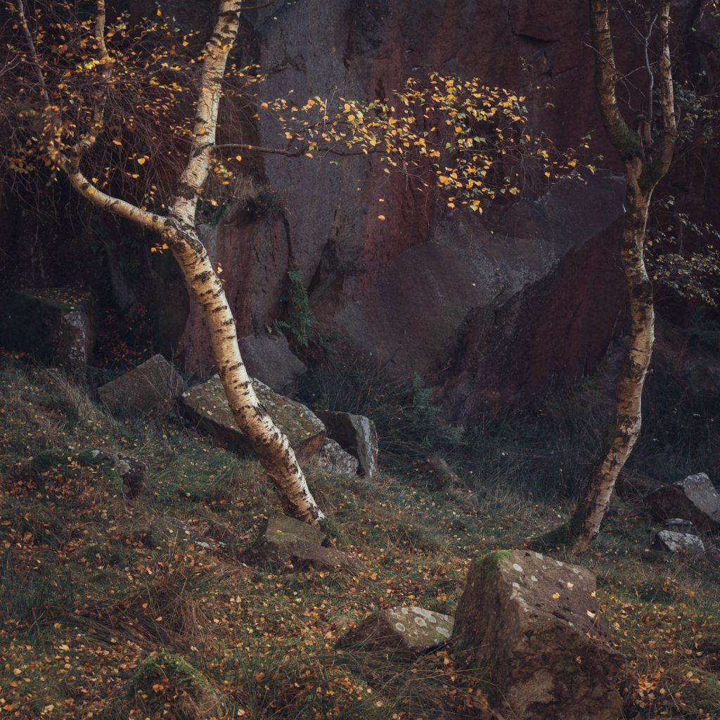 Birch and Rock