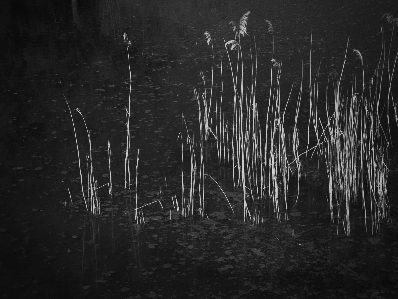 Infrared Reeds