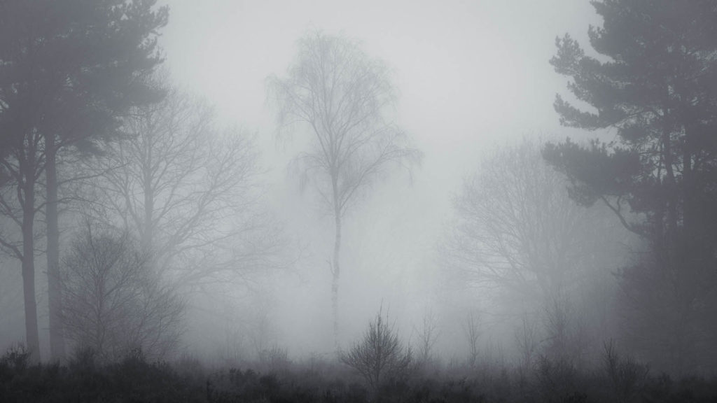 Foggy Silver Birch Sherwood Forest